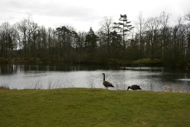 Golf Isabella - Paris - Francia - Alquiler de palos de golf